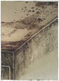 C mo eliminar el moho de las paredes productos antimoho - Humedad por condensacion en paredes ...