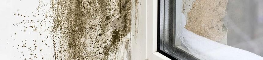 C mo eliminar moho de las paredes pinturas el artista - Moho en paredes ...