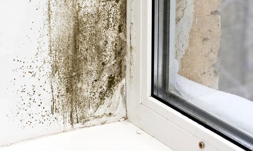 Quitar manchas de moho en paredes sin lejia finest cmo for Limpiar moho pared